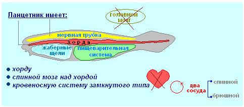 Тест по биологии рыбы
