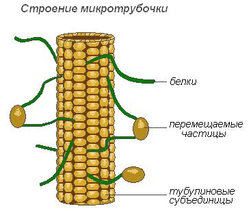 планы конспекты 6 класс биология