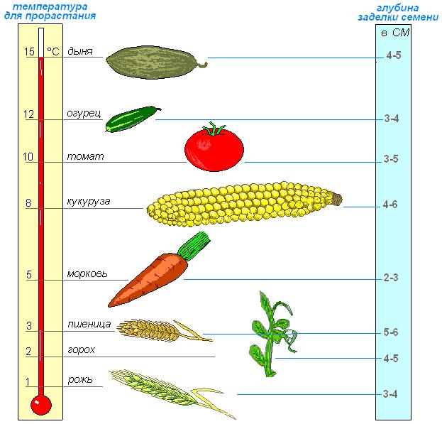 Глубина заделки семян зависит