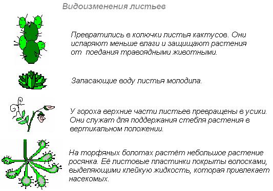 Листочки схемы и обозначения