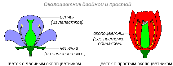 что значет цветок без правого липестка России Воронежской
