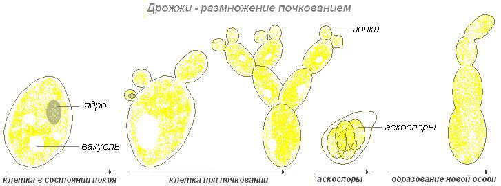 паразиты живущие в организме человека
