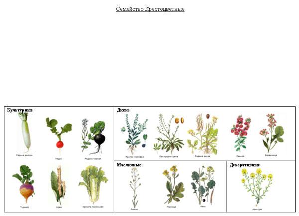 Многообразие покрытосеменных