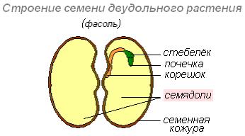 Тест по биологии строение клетки