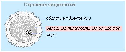 visyachiy-ogromniy-siski