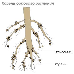 Бактерии помощники человека