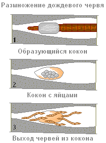 эволюция дождевых червей
