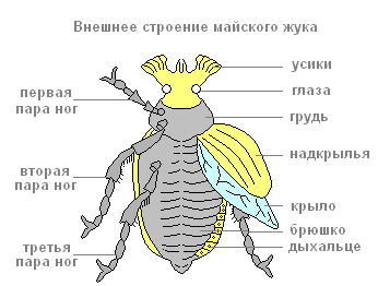 Самые красивые виды жуков на планете Земля: фото и описание