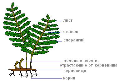 https://biouroki.ru/content/f/763/1.png