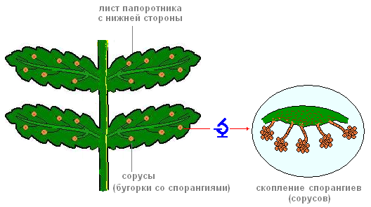 https://biouroki.ru/content/f/763/2.png