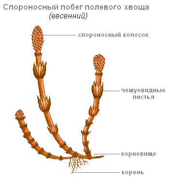https://biouroki.ru/content/f/763/3.png