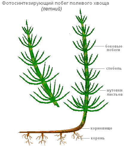 https://biouroki.ru/content/f/763/4.png