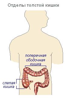 Поджелудочной железы тонком кишечнике питательные вещества thumbnail